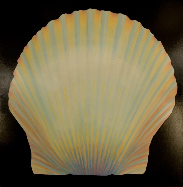 Carolina bay scallop